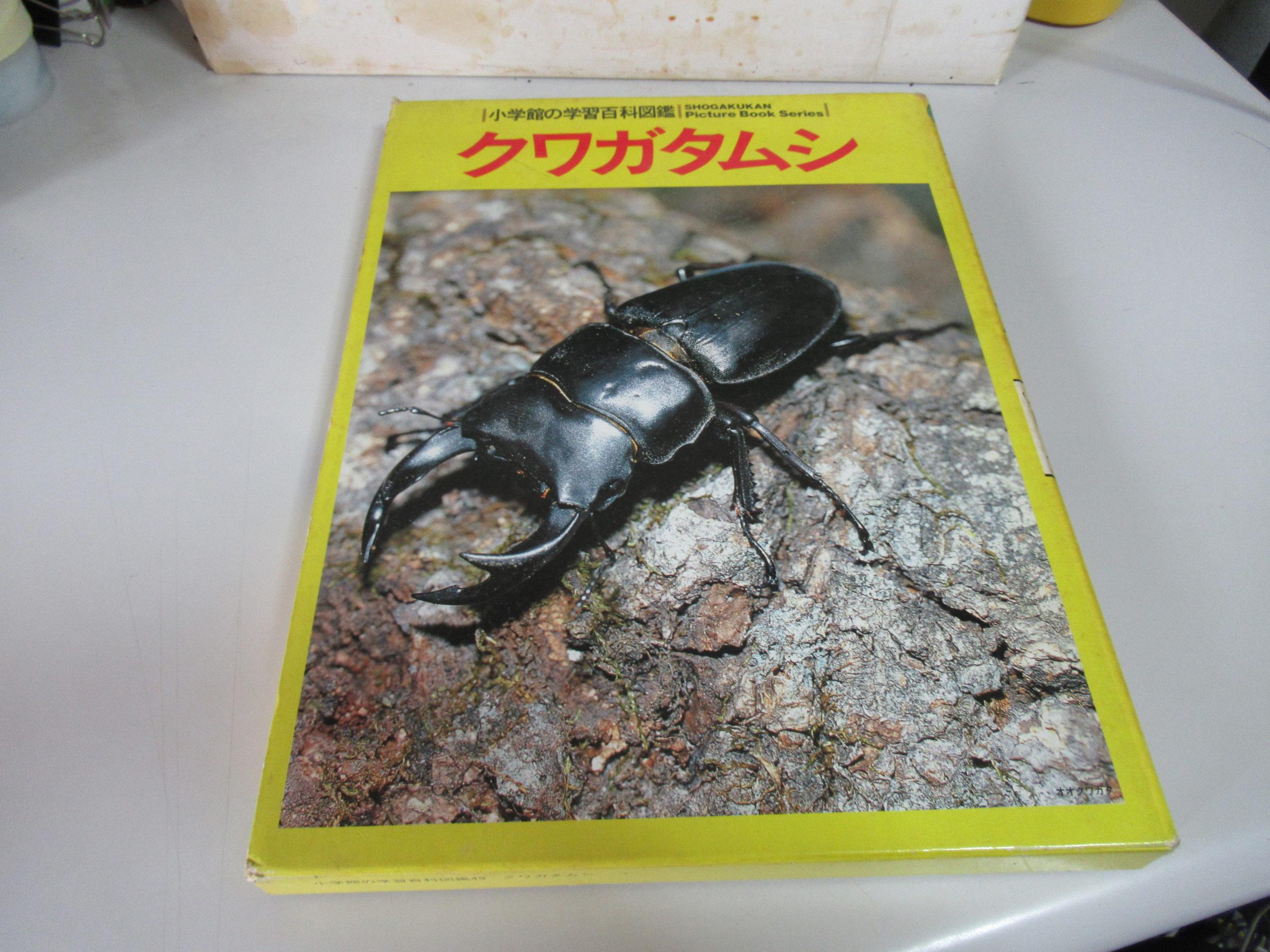 昆虫採集に必要なこととは?私がオオクワガタを採れない理由