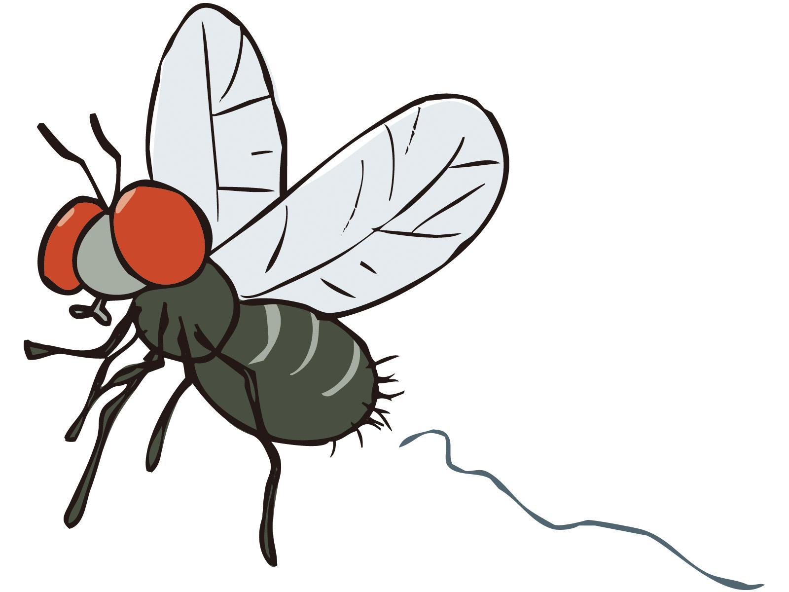 クワガタ・カブトムシ飼育につきものコバエ対策方法