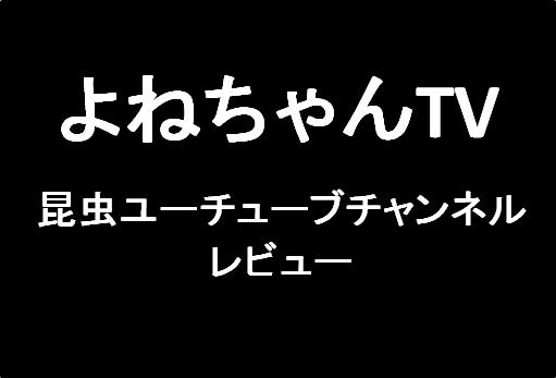 よねちゃんTV:昆虫ユーチューブチャンネルレビュー