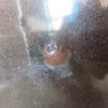 ヤエヤママルバネクワガタ3令幼虫の飼育途中経過(11月)と今後のプラン