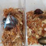 モーレンカンプオウゴンオニクワガタの産卵セット投入2回目