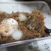ヒメオオクワガタの産卵セットの改善点(管理温度と湿度)